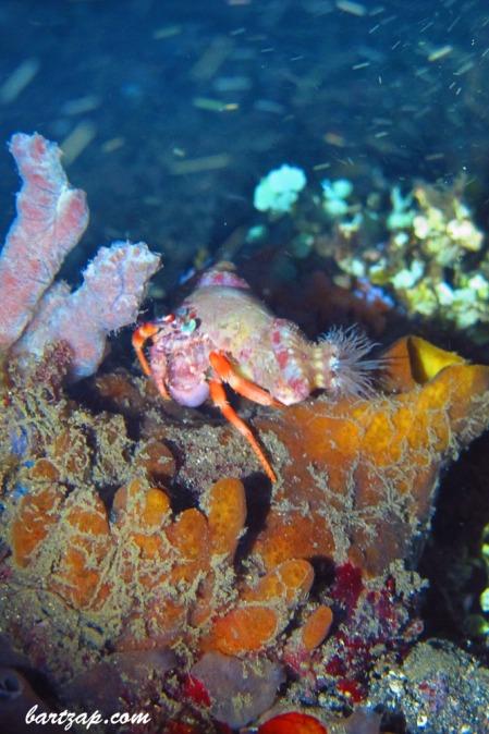 Hermit-Crab-2