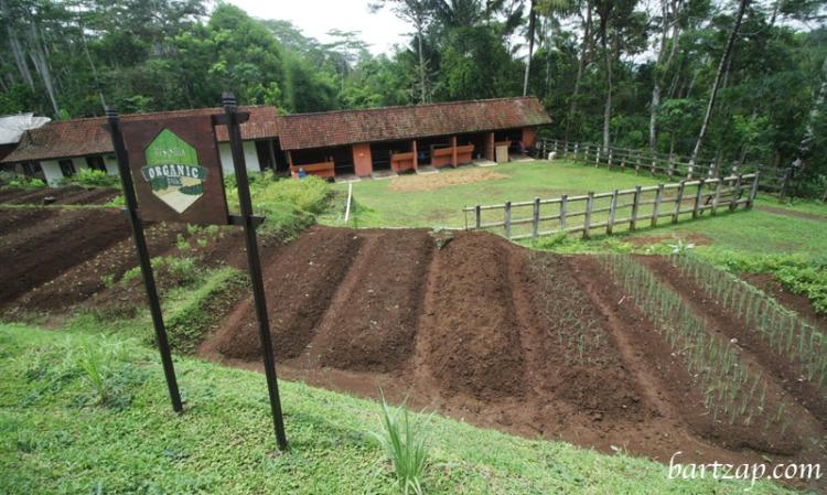 organic-farming-di-mesastila-resort-magelang