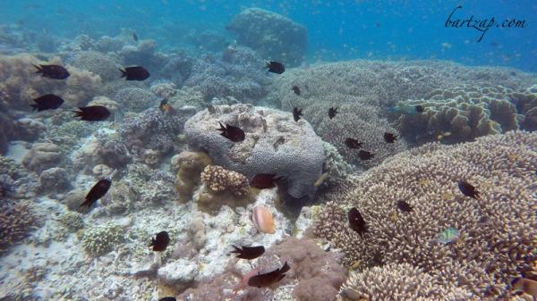 gugusan-karang-tanjung-karang-donggala-09