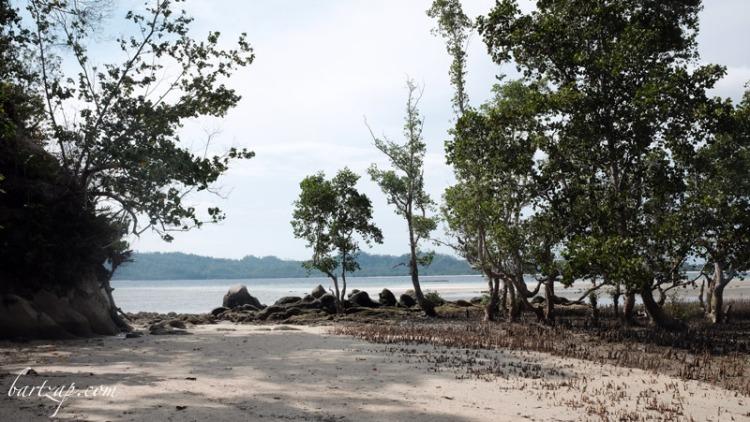 hutan-bakau-di-pantai-labuana-donggala