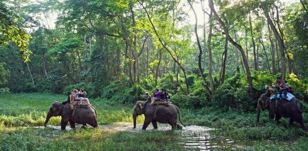 Chitwan_National_Park_original_2800