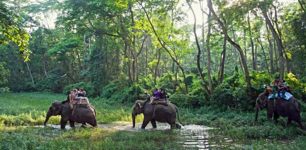 Chitwan_National_Park_original_2800