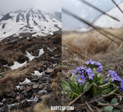 musim-semi-di-annapurna-base-camp