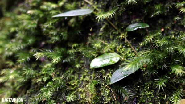 vegetasi-hutan-hujan-tips-trekking-di-musim-hujan-bartzap-dotcom