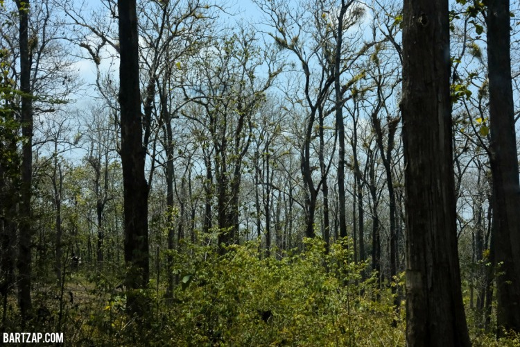 hutan-jati-jalan-menuju-warung-ayam-bakar-mak-gogok-blora-bartzap-dotcom